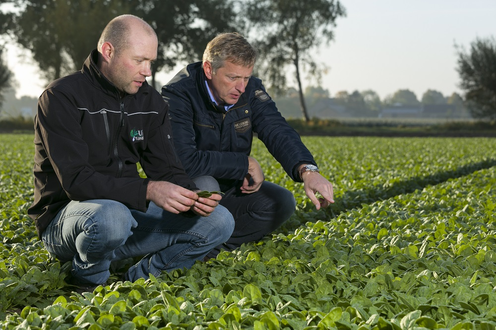 Rijk Zwaan representative Wim in 't Groen and spinach grower Edwin Uijen