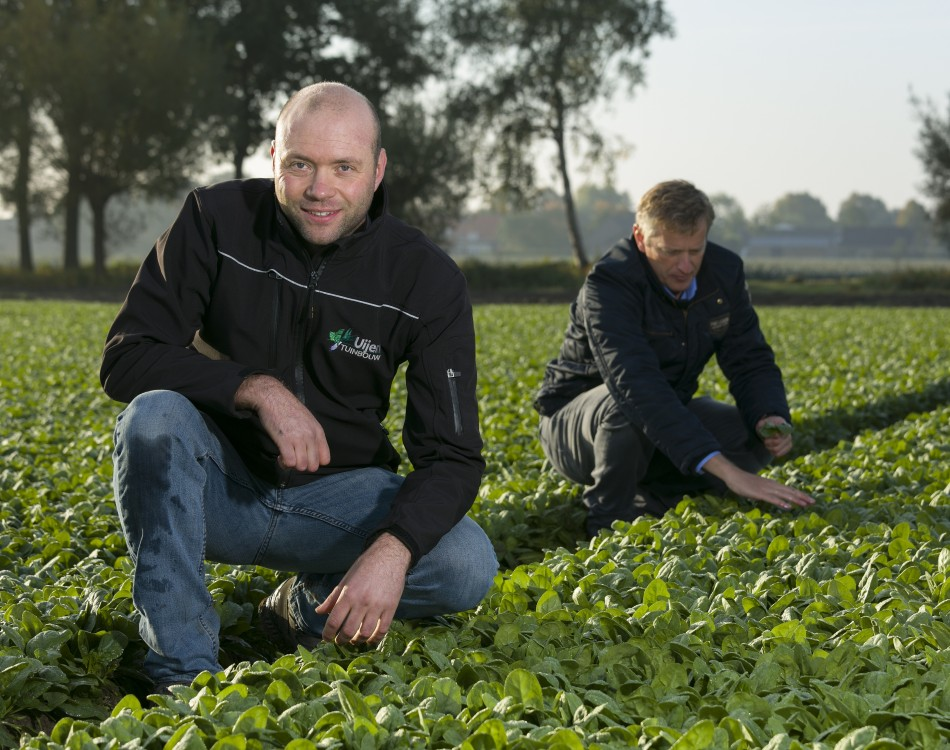 Spinach grower Edwin Uijen with representative Wim in 't Groen